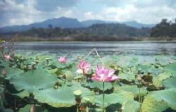 http://www.ecologyasia.com/images-articles/Tasik_Chini_Daytime.jpg
